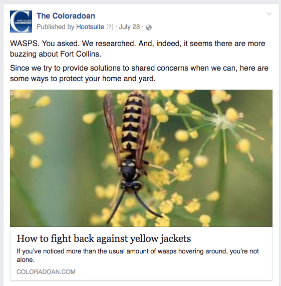 CO yellow jackets
