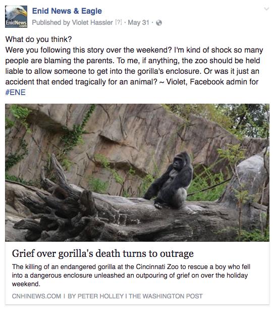 Enid gorilla