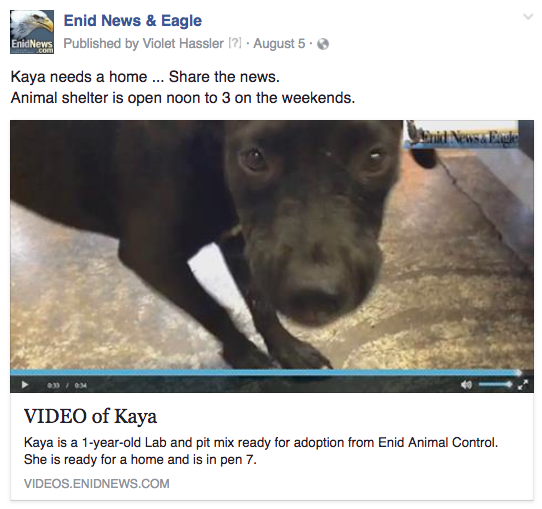 Enid animal adoption