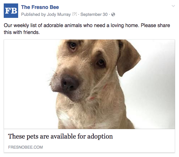 Fresno pet adoption weekly